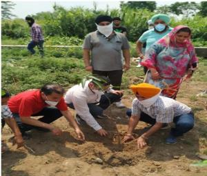 Horticulture Department distributes free plants t...