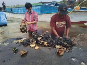 Dead whale in Indonesia had 115 plastic cups, 2 f...