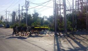 Garbage dumps on Bhagwati Nagar roads due to lack...