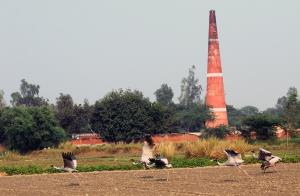 Brick kiln owners should develop green belt: DB