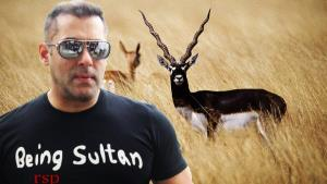 Blackbuck poaching case: Court acquits Salman Kha...