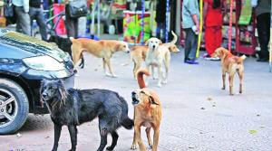 Toddler mauled to death by stray dogs in Chandiga...