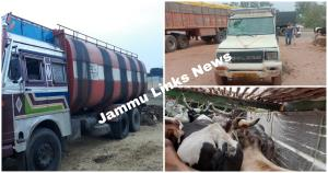 Bovines smuggling bids foiled; 75 cattle rescued,...